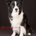 Adelaide Pet Photos, animal photography and dog photos