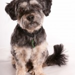 Adelaide Pet Photos, professional pet photography, Adelaide
